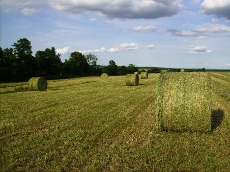 Rolled Hay 3