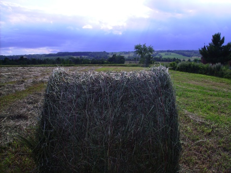 Rolled Hay 2